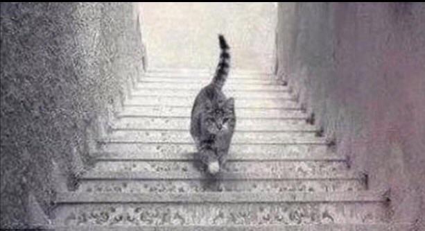 猫是上楼还是下楼?这或许就是答案